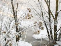 река дня морозное стоковое изображение rf