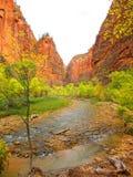 Река девственницы, национальный парк Сиона, Юта Стоковые Изображения RF