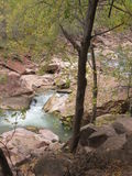 Река девственницы, национальный парк Сиона, Юта Стоковые Фото