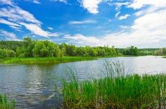 Река леса на летнем дне стоковые изображения rf