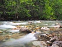 Река леса пропуская над утесами Стоковая Фотография