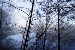 Река леса тумана рано утром Стоковое Фото