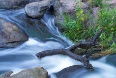 Река леса Стоковое фото RF