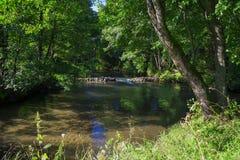 Река леса стоковое фото