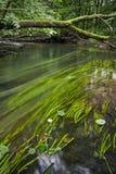 Река леса Стоковая Фотография