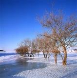 река замерли bush, котор Стоковые Фотографии RF