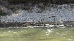 Река Изара в Баварии акции видеоматериалы