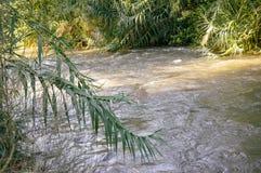 Река Иордан, Израиль стоковое фото