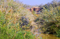 Река Иордан, Святая Земля Стоковая Фотография RF