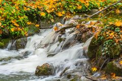 Река и водопад осени с плющом Стоковая Фотография