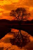 Река и дерево захода солнца Стоковая Фотография RF