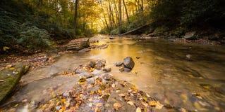 Река и лес осенью Стоковое фото RF
