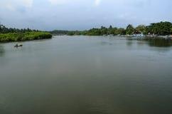 Река и мангрова Стоковая Фотография