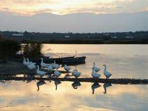 Река и птицы захода солнца Стоковое Изображение