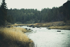 Река и пуща Стоковая Фотография