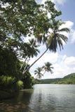 Река и тропический лес Стоковая Фотография