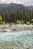 Река и тропический лес Hoh стоковая фотография rf