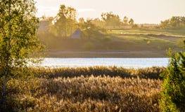 Река и тростники стоковое фото