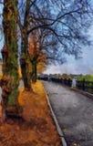 река картины маслом ландшафта пущи ландшафт упаденный осенью выходит желтый цвет дороги парка Стоковые Фотографии RF