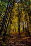 река картины маслом ландшафта пущи ландшафт упаденный осенью выходит желтый цвет дороги парка Стоковое Фото