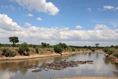 Река Кения mara masai бегемота Стоковая Фотография RF
