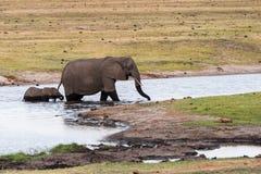 Река креста взрослого и слона младенца стоковое изображение