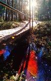 Река крови в лесе стоковые фото