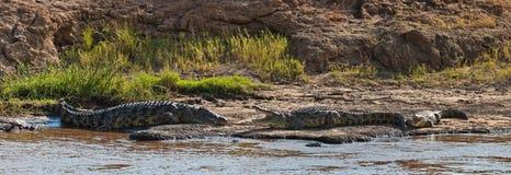 река крокодилов 3 банка Стоковое фото RF