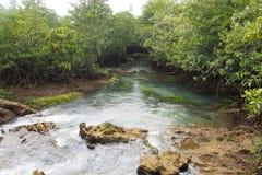 Река к морю Стоковые Изображения RF