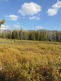 Река Левиса течь через национальный парк Йеллоустона Стоковое Изображение RF