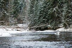Река леса в зиме Amata в Латвии стоковое изображение rf