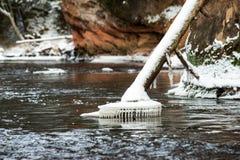 Река леса в зиме Amata в Латвии стоковое фото