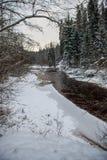 Река леса в зиме Amata в Латвии стоковые изображения