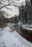 Река леса в зиме Amata в Латвии стоковая фотография rf