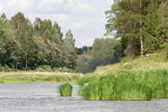 Река, лес, трава в воде стоковое фото rf