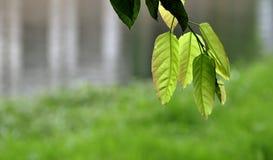 река листьев Стоковое Изображение RF
