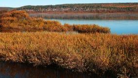 река лужка Стоковое Изображение