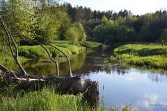 река малое Стоковые Изображения