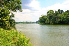 река мангровы Стоковые Изображения