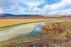 Река на желтом злаковике в осени стоковые изображения rf
