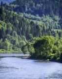Река на прикарпатском лесе Стоковые Фотографии RF
