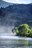 Река на прикарпатском лесе Стоковая Фотография RF