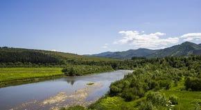 Река на прикарпатском лесе Стоковые Фото