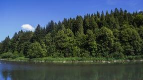 Река на прикарпатском лесе Стоковое Фото