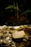 река одичалое Стоковая Фотография RF