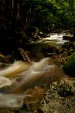 река одичалое Стоковые Фотографии RF