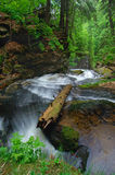 река одичалое Стоковые Фото