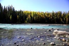 Река около леса стоковая фотография rf