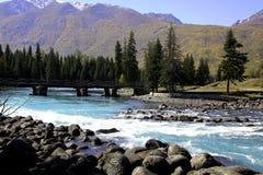 Река около леса стоковые изображения rf