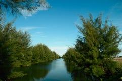 Река окруженное деревьями Стоковая Фотография